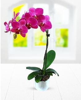 Tek dallı mor orkide  Adana çiçek satışı