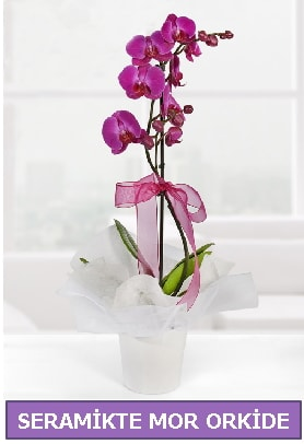 Seramik içerisinde birinci kalite tek dallı mor orkide  Adana İnternetten çiçek siparişi