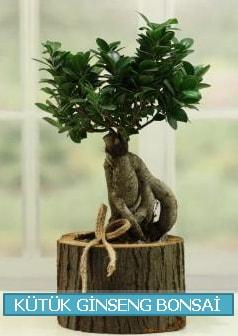Kütük ağaç içerisinde ginseng bonsai  Adana çiçek gönderme sitemiz güvenlidir