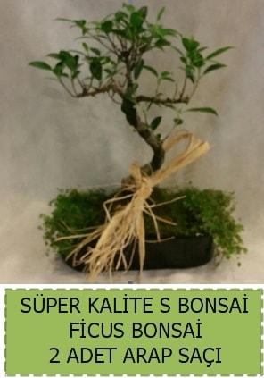 Ficus S Bonsai ve arap saçı  Adana çiçekçi telefonları