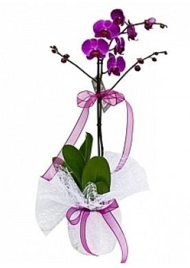 Tekli Mor Orkide  Adana çiçek yolla