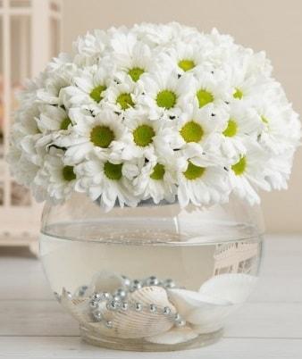 Fanusta beyaz Papatya  Adana çiçek satışı