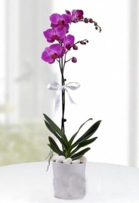 Tek dallı saksıda mor orkide çiçeği  Adana çiçekçiler