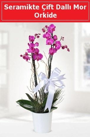 Seramikte Çift Dallı Mor Orkide  Adana anneler günü çiçek yolla